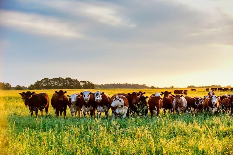 ¿Qué tipos de ganadería existen?